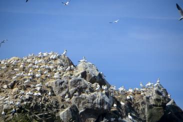 Des oiseaux sur un rocher