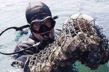 Un plongeur et des coquilles