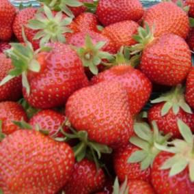 strawberry-sq
