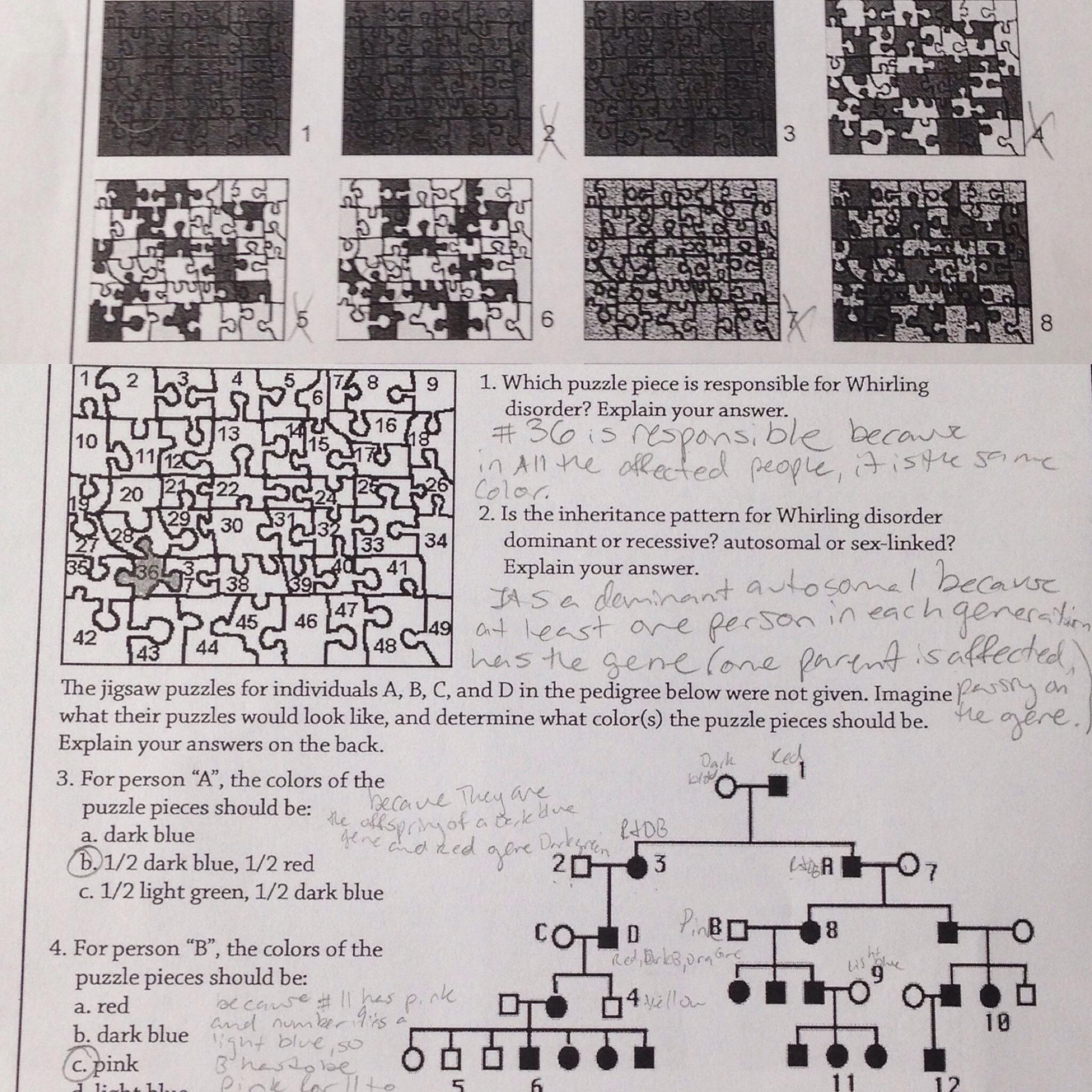 Chromosome Mutation Worksheet