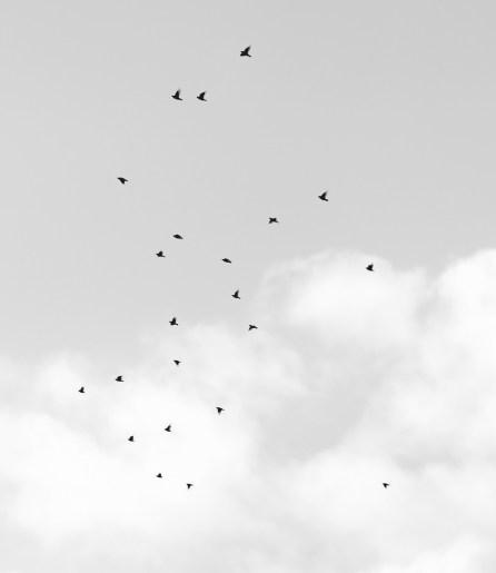 fly_high_closeup