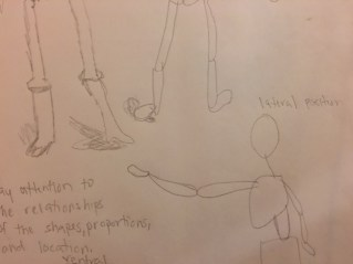 anatomy-and-torso-3