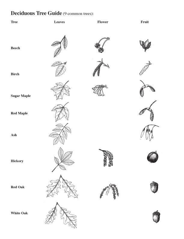Common Trees of SC