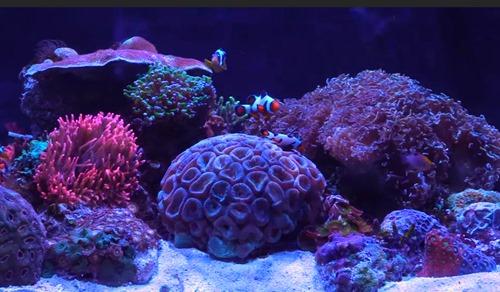 best reef tank led lights and par for