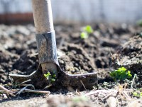 Free Spring Gardening Events