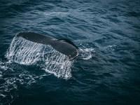 Make a Splash during Whale Watching Week