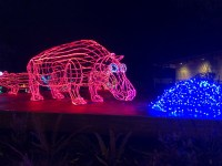 Oregon ZooLights Offers $5 Admission to Qualifying Families