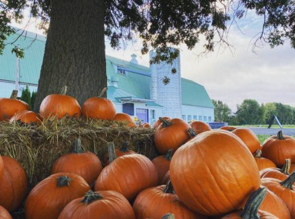 portland pumpkin patches columbia farms