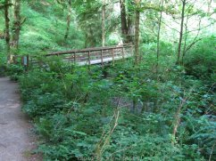 Bridge over Balch Creek