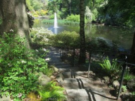 Cystal_Rhododendrons_IMG_5623