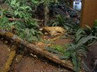 ForestMuseum_IMG_2049