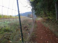 The trail brings you up to the neighbors property. A tall dear fence is in place to keep deer out from the grapes.