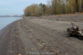 Beach along the Willamette River