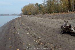 Beach along the Willamette River
