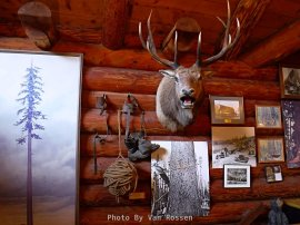 The walls are covered with photos and artifacts from the early days of logging.