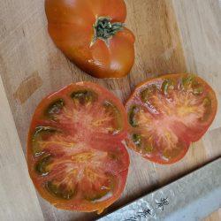 terra cotta tomato
