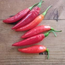 Balik pepper