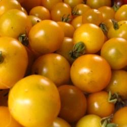 Gobstopper tomato