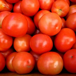 red rock tomato