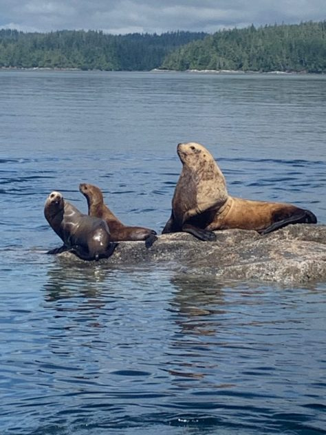 Vancouver Island water taxi wildlife