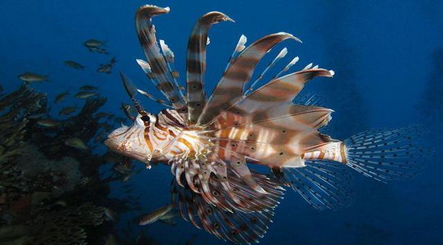 Portnet - Τα περισσότερα ιδιωτικά σκάφη στις μαρίνες της Μεσογείου μεταφέρουν ξενικά θαλάσσια είδη