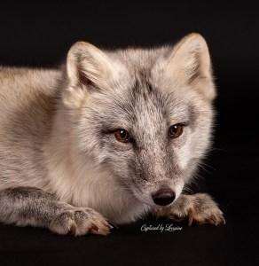 Illinois Pet Photographer