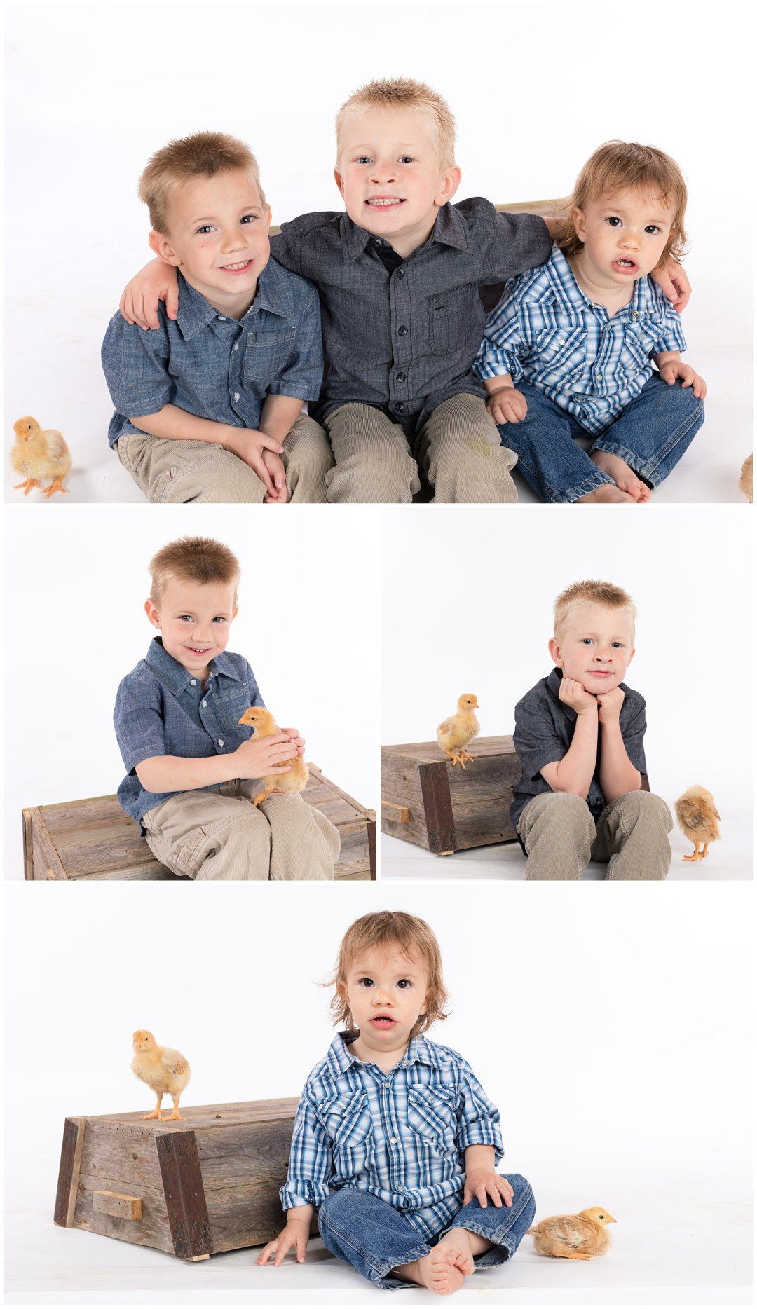 Brothers portraits for Easter with baby chicks