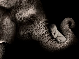 baby on elephant trunk