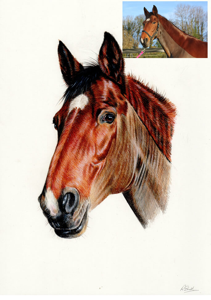colour pencil drawing of horse