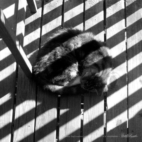 Stripes on Stripe, photo