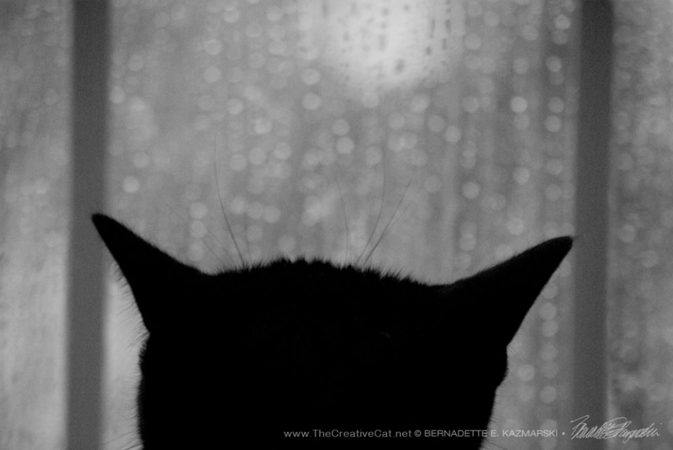 Of the Rain and Giuseppe, Pondering
