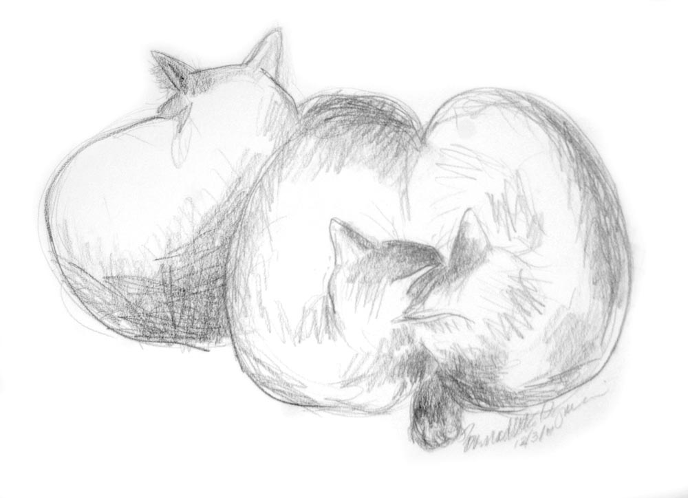 """Three Cats"", pencil, 12/3/11 © Bernadette E. Kazmarski"