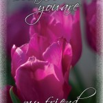 Friends Pink Tulips