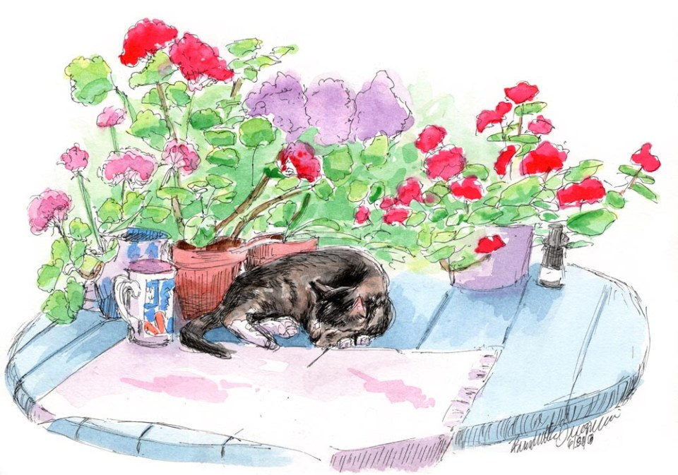 """Stanley With Geraniums"", ink and watercolor, 9"" x 12"" © Bernadette E. Kazmarski"