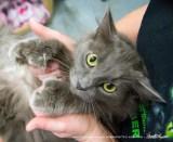 The gray mama kitty's big mittens.
