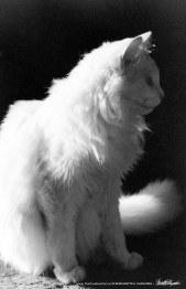 Sally, Profile.