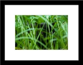 The Huntress: Waiting, framed