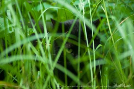 The Huntress: Waiting, Photo