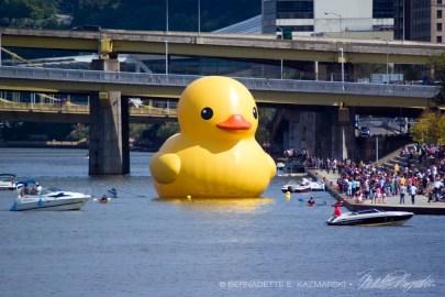092813-duck-closeup