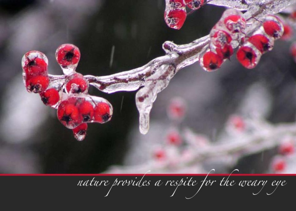 "Icy Berries, part of the ""Unexpected Berries"" set of cards."