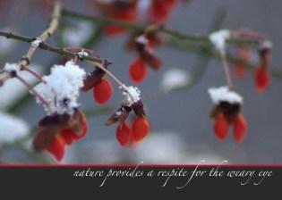 Unexpected Berries