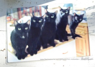 Five Black Cats in color.