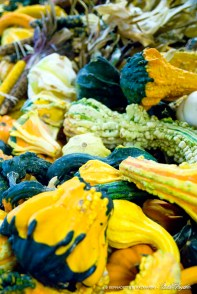 bedners-gourds2-1000px