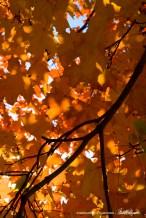leaves-orange-1000px