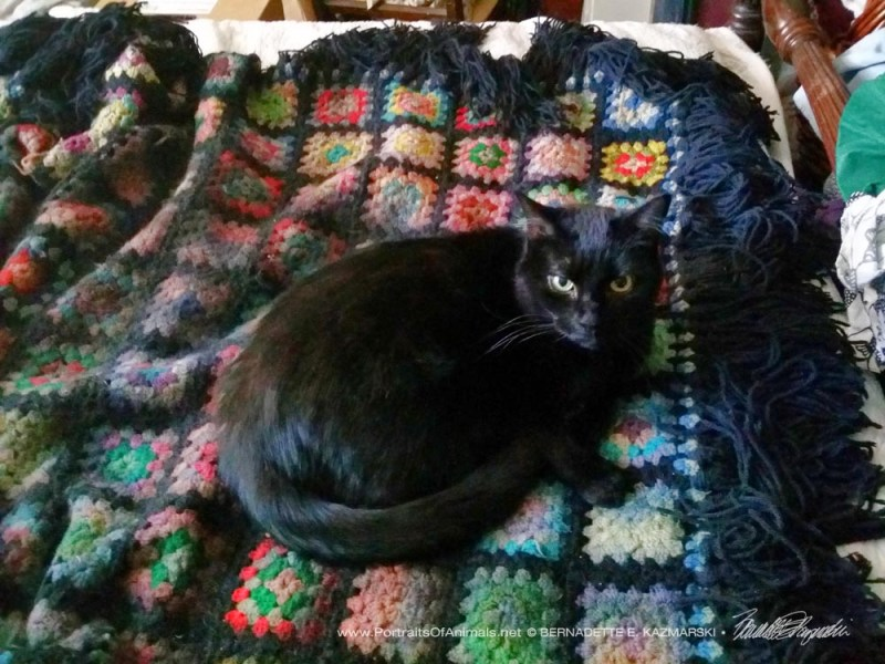 "The reference photo for ""Mewsette on the Afghan""."