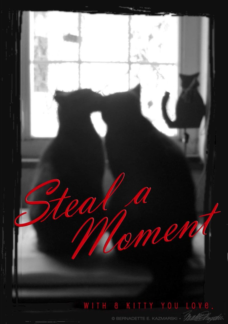 Steal a Moment With a Kitty You Love