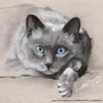 """Chloe"", charcoal and pastel, 5 x 7 © Bernadette E. Kazmarski"