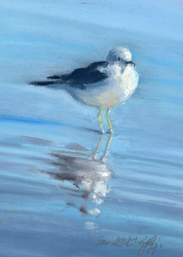 Observant Gull pastel on gray fleck mi-tientes, 5 x 7 © Bernadette E. Kazmarski