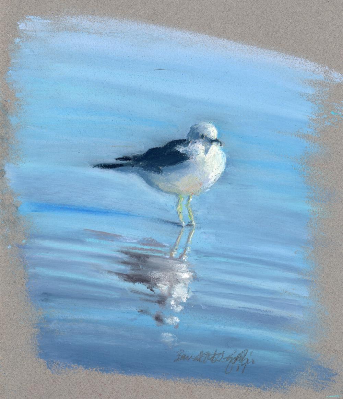 Observant Gull uncropped version © Bernadette E. Kazmarski