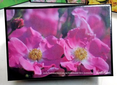 Pink Pasture Rose small gift box